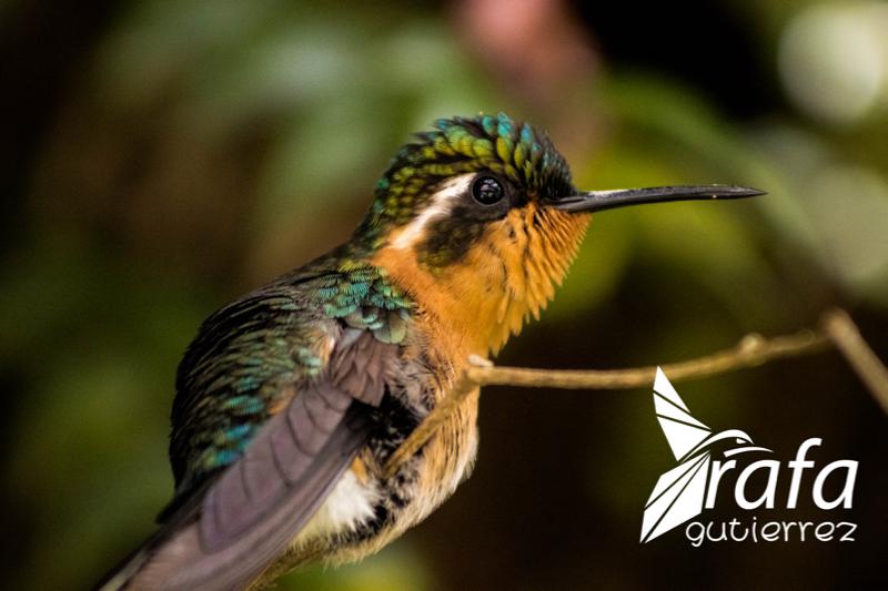 Birding Gallery Image