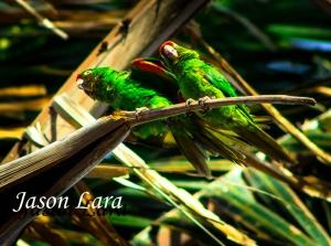 Two Parakeets by Rafa Gutierrez