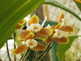 Yellow Orchids Header Size
